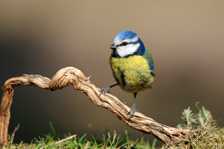 pl_itineriary_birding_observacion_observacio_ocells_aves_03