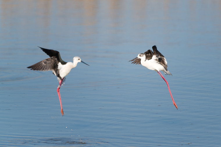 pl_itineriary_birding_observacion_observacio_ocells_aves_07