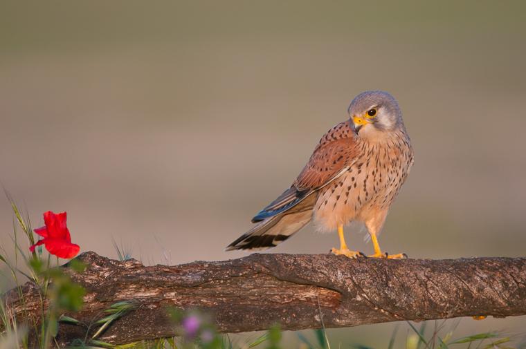 pl_itineriary_birding_observacion_observacio_ocells_aves_09