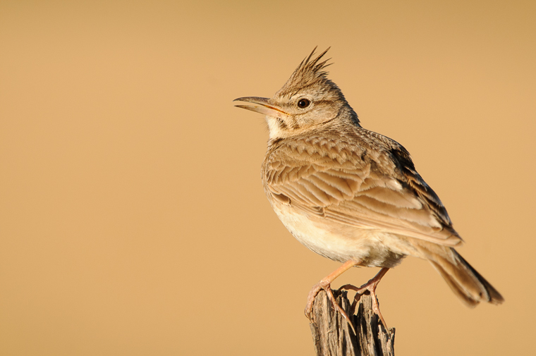 pl_itineriary_birding_observacion_observacio_ocells_aves_11