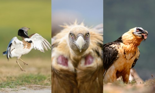 Spanish steppes and vultures photo trip
