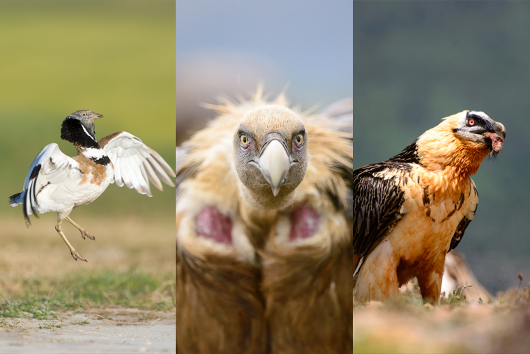 pl_steppe_and_vultures_photo_trip