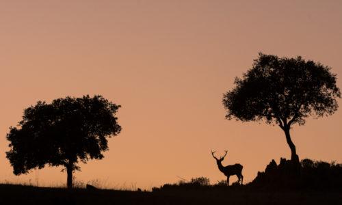 deer-hide-andujar-ciervo